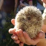 Critter Squad Hedgehog