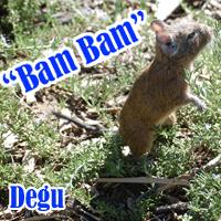 Bam_Bam
