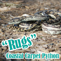Coastal_Carpet