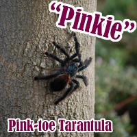 Pink_Toe