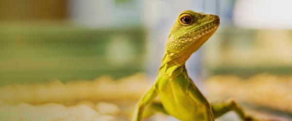 Exotic reptiles