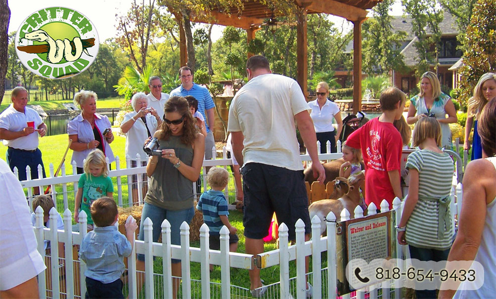 How to Arrange a Petting Zoo for Parties