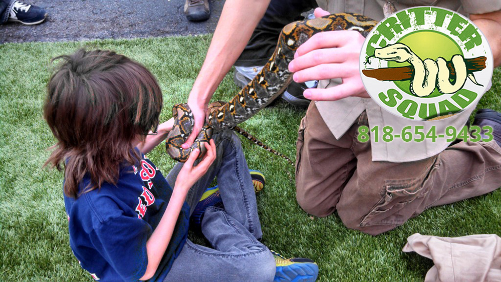 What Reptile Shows for Birthday Parties Bring to the Event