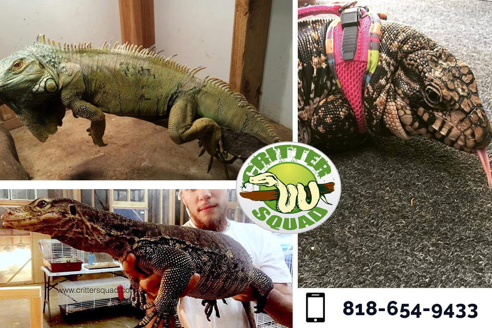 Introduce Your Child to Exotic Reptiles