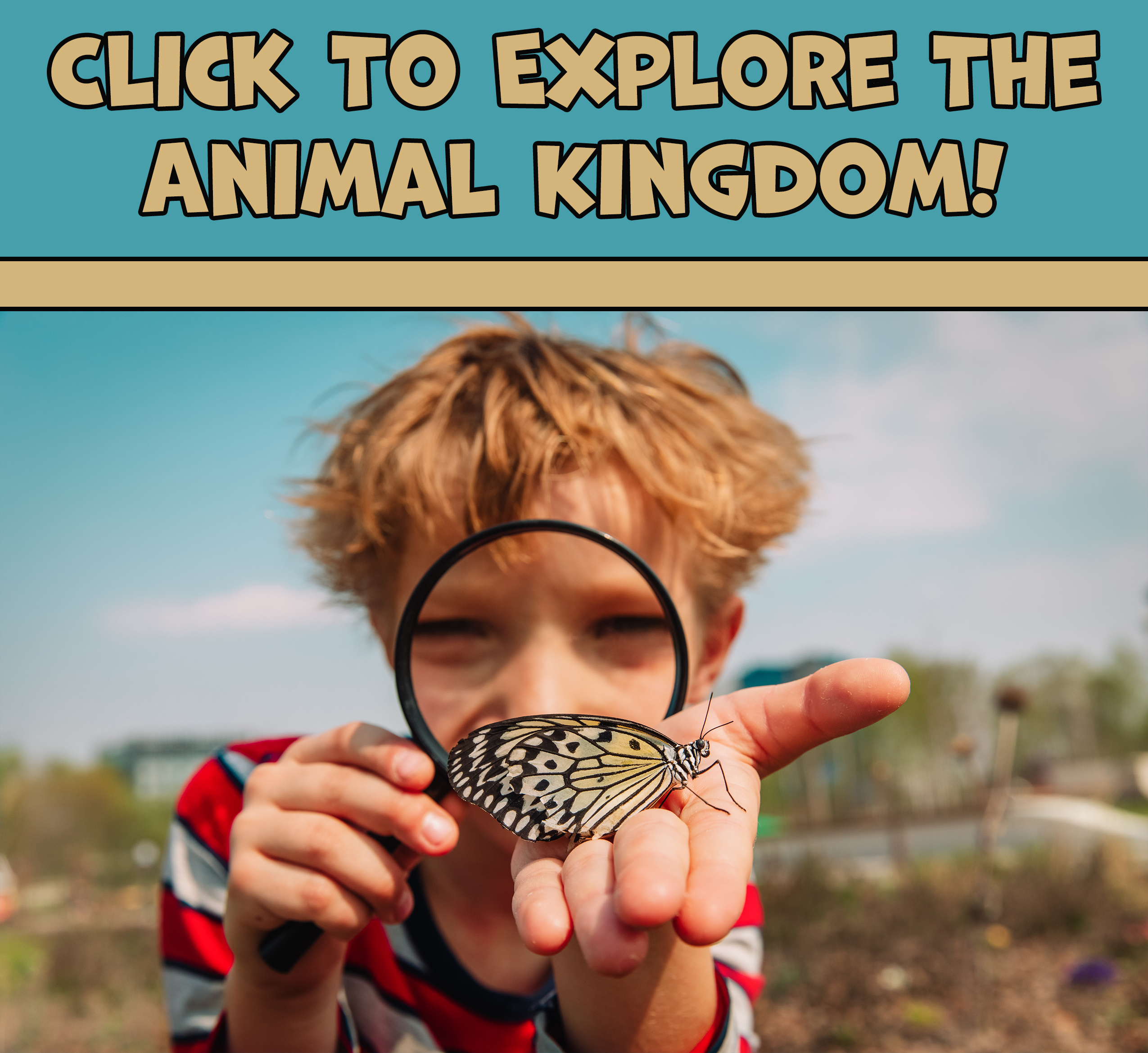 animal kingdom pics