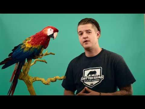 C S W D TV Episode  Animal Communication