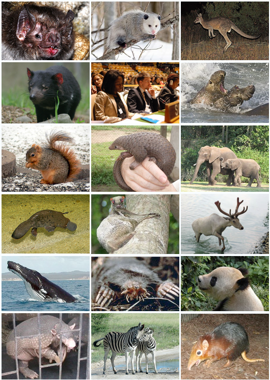 Mammal Diversity  less depressing