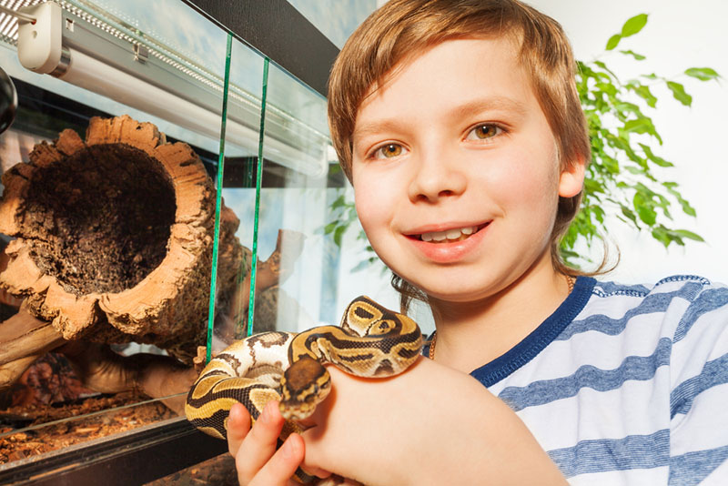 It's Time for a Reptile Birthday Bash