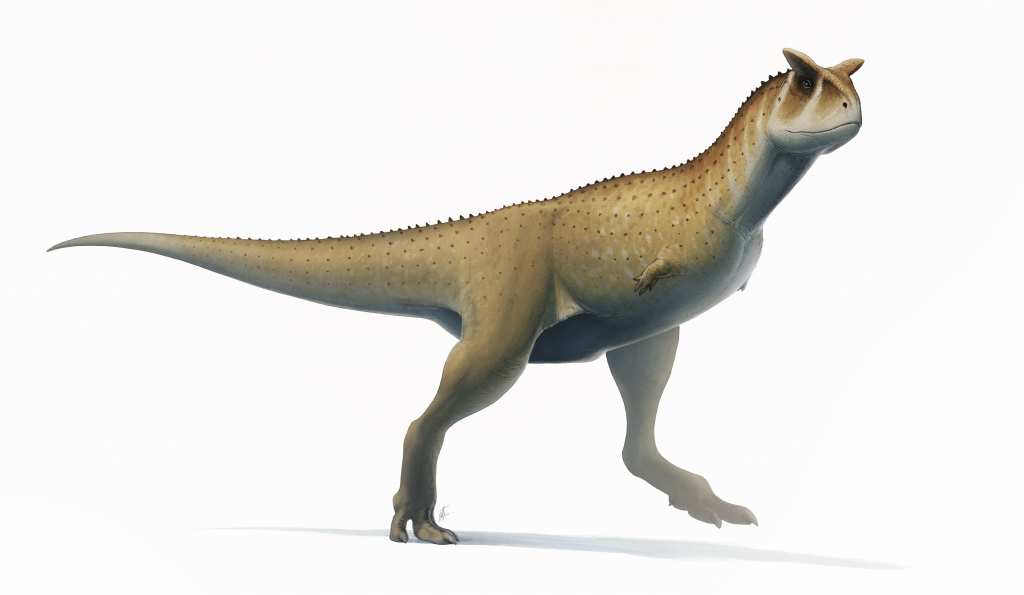 Carnotaurus Fact Sheet - C.S.W.D