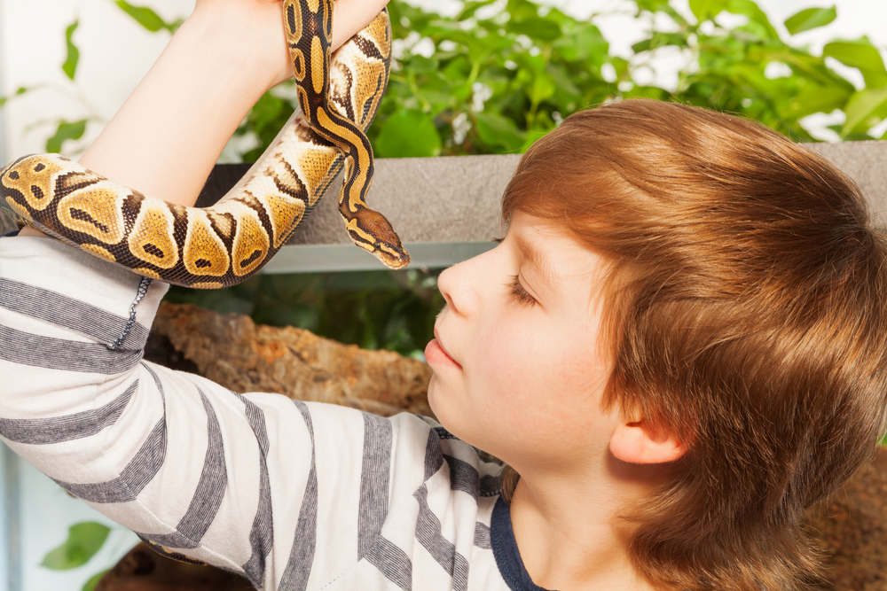Best Reptiles for Parties