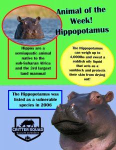 Hippo Info graphic
