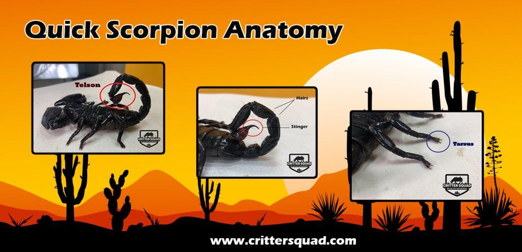 quik scorpion anatomy banner
