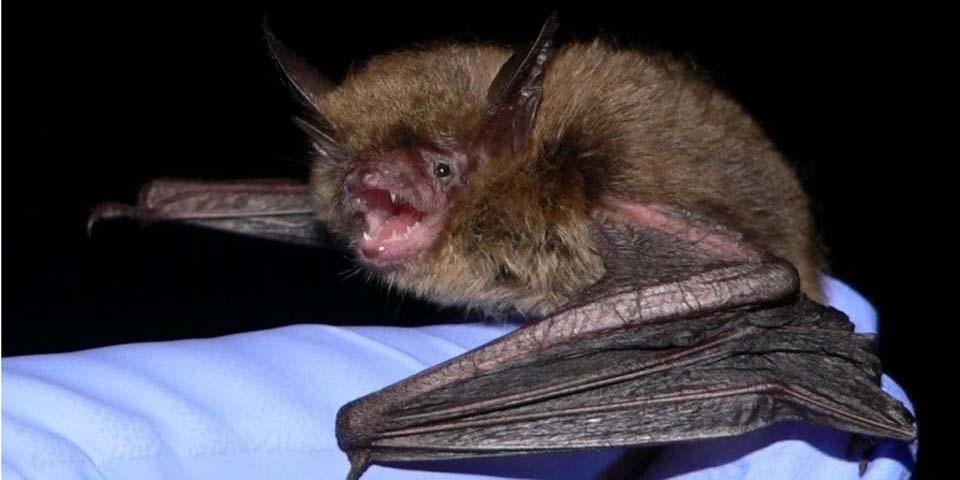 Bats Top Photo Crop