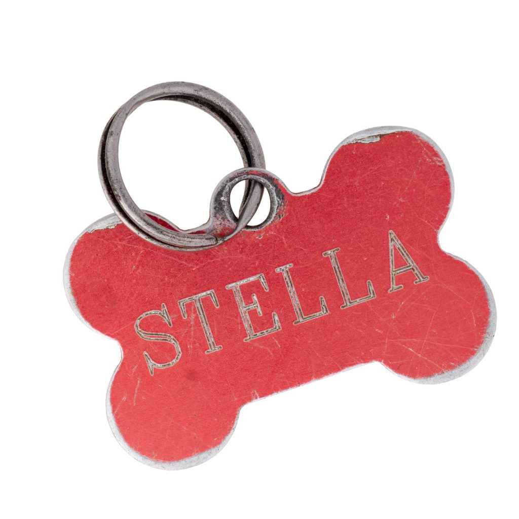 Old dog name tag in shape of bone, red, with name Stella Memento to remember deceased pet, isolated on white