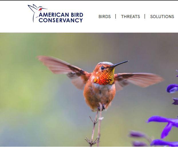 american bird