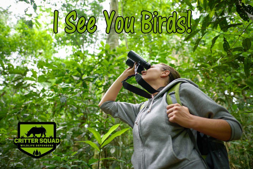 Tourist looking through binoculars considers wild birds in the j